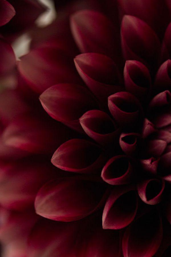Всё, что нужно знать о цвете Марсала