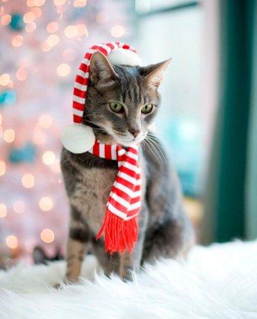 20 новогодних нарядов для котов