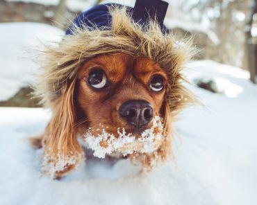 Зимние маски для лица и волос из привычных ингредиентов